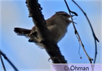 fåg 1 (2).jpg