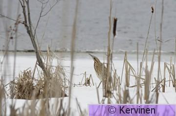 2006-04-14_008_Kaulushaikara.JPG