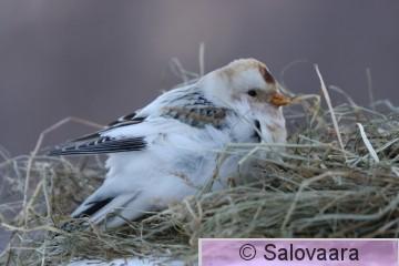 pulmunen, kuva Risto Salovaara_1615.JPG