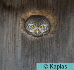 Glapas_001_17.jpg